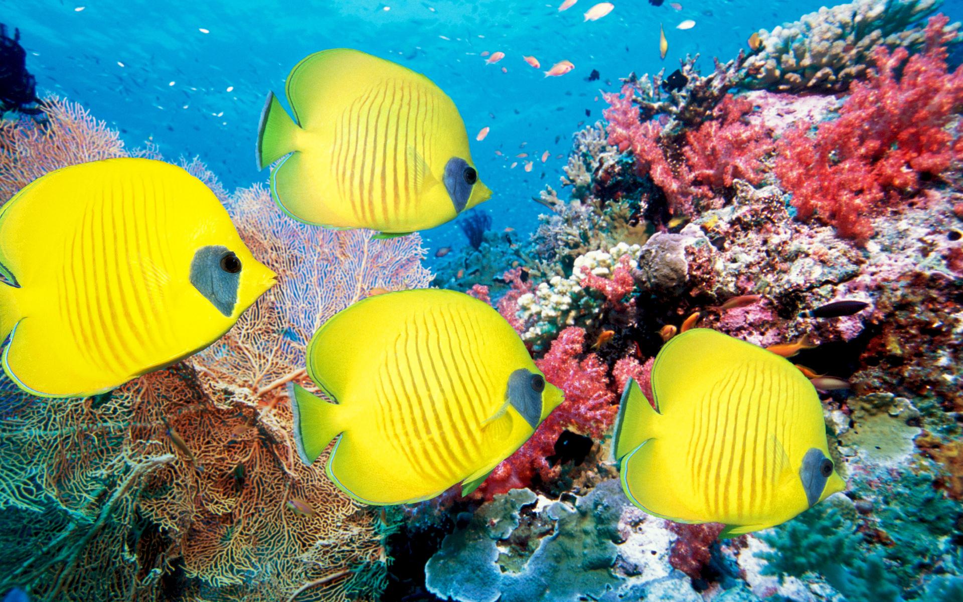 Aquarium water pump for Beautiful tropical fish